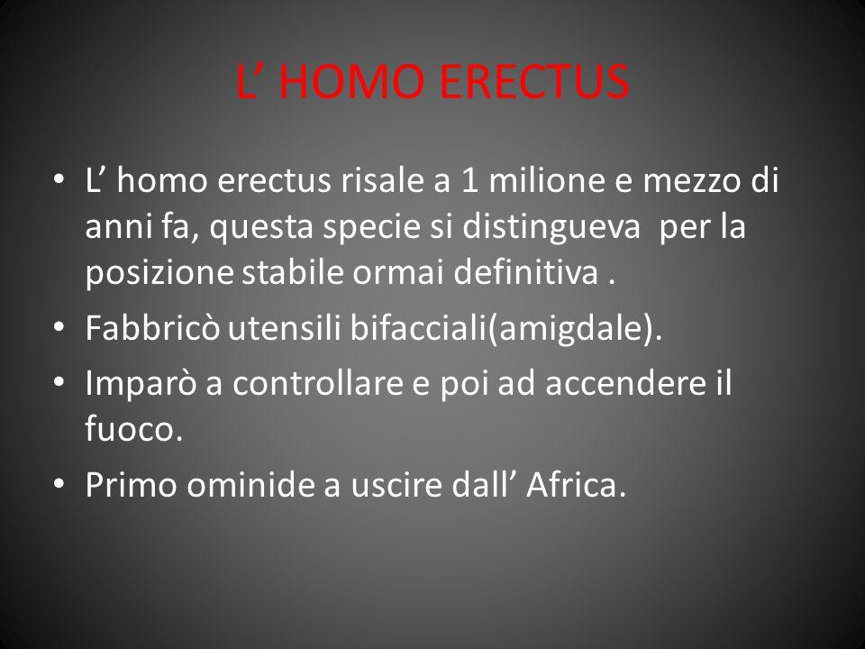 L' HOMO ERECTUS L' homo erectus risale a 1 milione e mezzo di anni fa, questa specie si distingueva per la posizione stabile ormai definitiva .