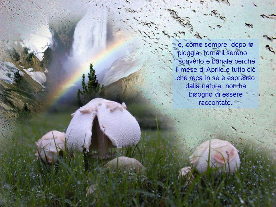 e, come sempre, dopo la pioggia, torna il sereno…