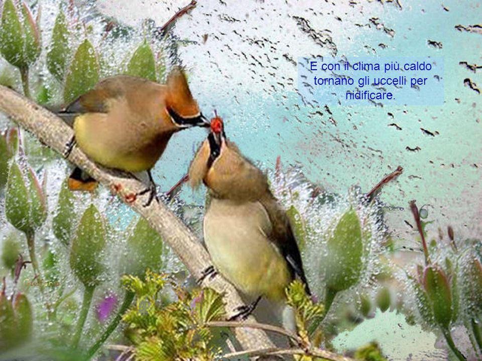 E con il clima più caldo tornano gli uccelli per nidificare.