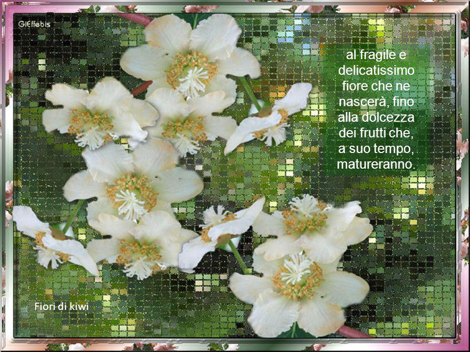al fragile e delicatissimo fiore che ne nascerà, fino alla dolcezza