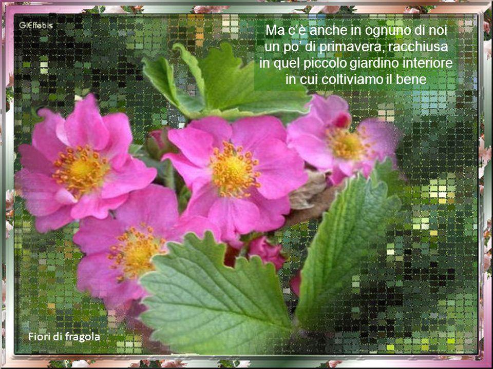 Ma c'è anche in ognuno di noi un po' di primavera, racchiusa in quel piccolo giardino interiore in cui coltiviamo il bene