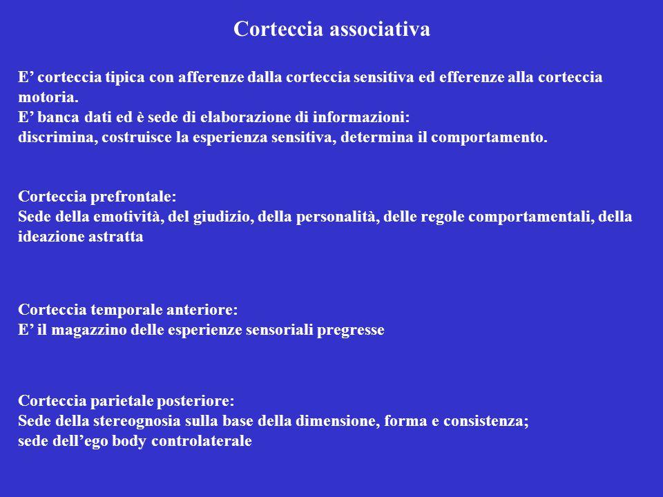 Corteccia associativa