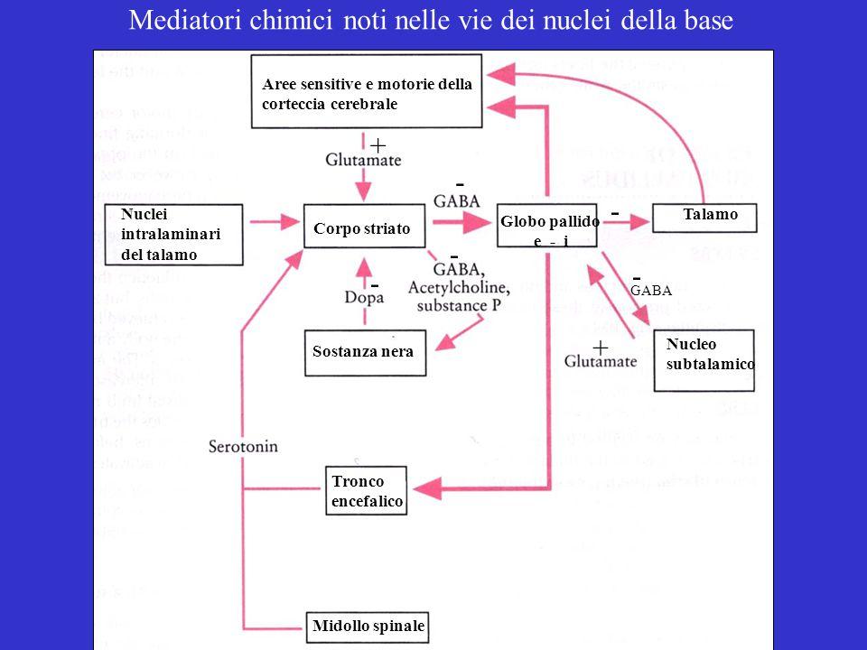 Mediatori chimici noti nelle vie dei nuclei della base