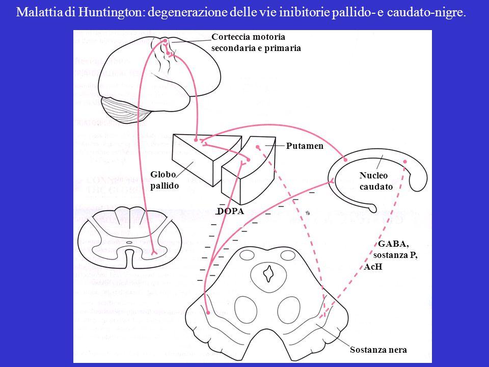 Malattia di Huntington: degenerazione delle vie inibitorie pallido- e caudato-nigre.