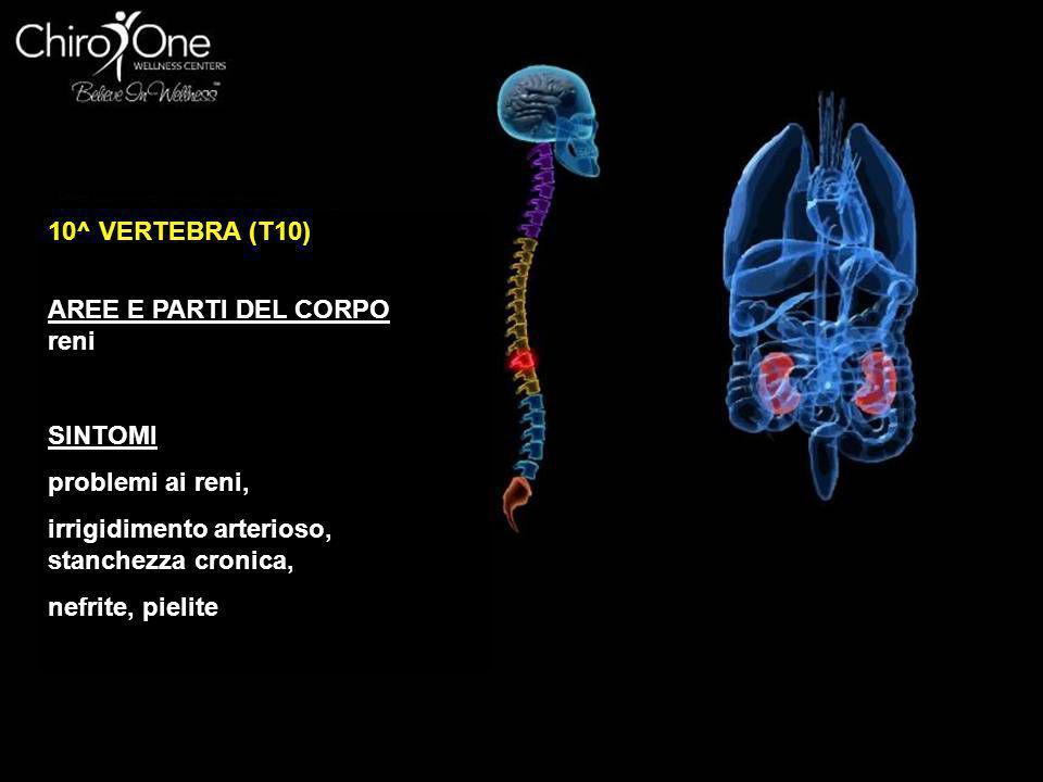 10^ VERTEBRA (T10) AREE E PARTI DEL CORPO. reni. SINTOMI. problemi ai reni, irrigidimento arterioso, stanchezza cronica,
