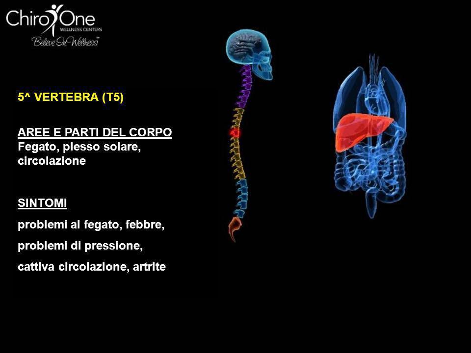 5^ VERTEBRA (T5) AREE E PARTI DEL CORPO. Fegato, plesso solare, circolazione. SINTOMI. problemi al fegato, febbre,