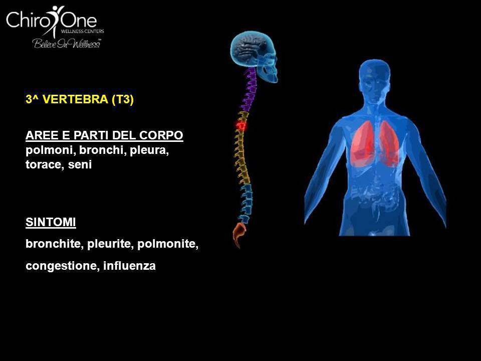 3^ VERTEBRA (T3) AREE E PARTI DEL CORPO. polmoni, bronchi, pleura, torace, seni. SINTOMI. bronchite, pleurite, polmonite,