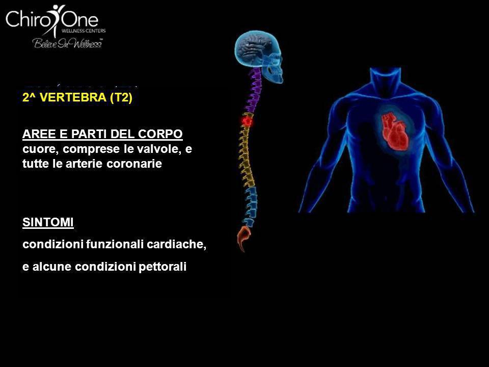 2^ VERTEBRA (T2) AREE E PARTI DEL CORPO. cuore, comprese le valvole, e tutte le arterie coronarie.