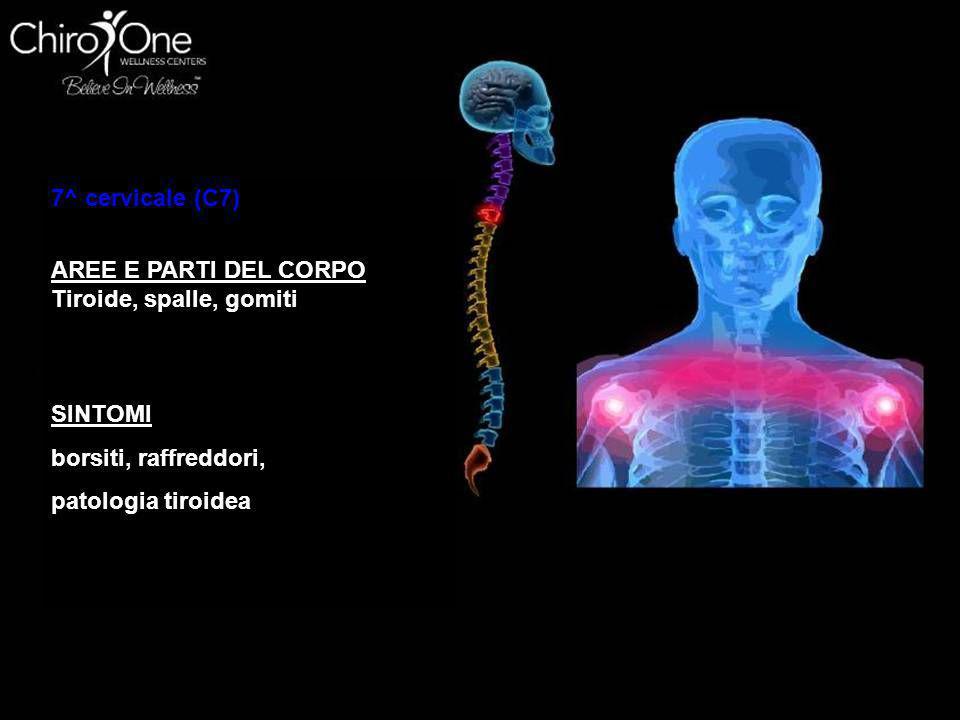 7^ cervicale (C7) AREE E PARTI DEL CORPO. Tiroide, spalle, gomiti. SINTOMI. borsiti, raffreddori,