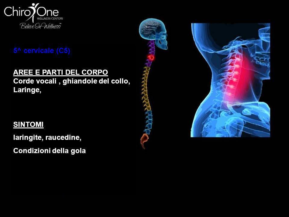 5^ cervicale (C5) AREE E PARTI DEL CORPO. Corde vocali , ghiandole del collo, Laringe, SINTOMI. laringite, raucedine,