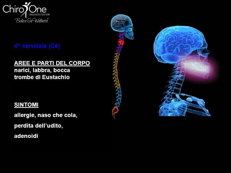 4^ cervicale (C4) AREE E PARTI DEL CORPO. narici, labbra, bocca. trombe di Eustachio. SINTOMI. allergie, naso che cola,