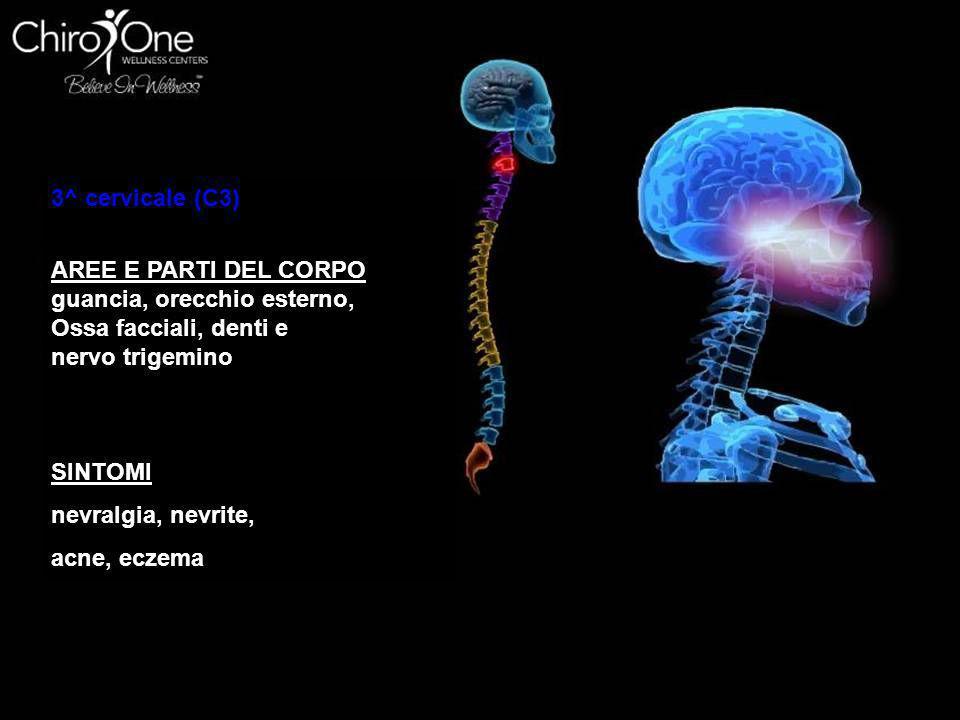 3^ cervicale (C3) AREE E PARTI DEL CORPO. guancia, orecchio esterno, Ossa facciali, denti e. nervo trigemino.