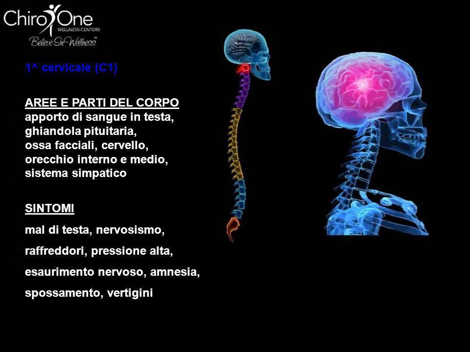 1^ cervicale (C1) AREE E PARTI DEL CORPO. apporto di sangue in testa, ghiandola pituitaria, ossa facciali, cervello,