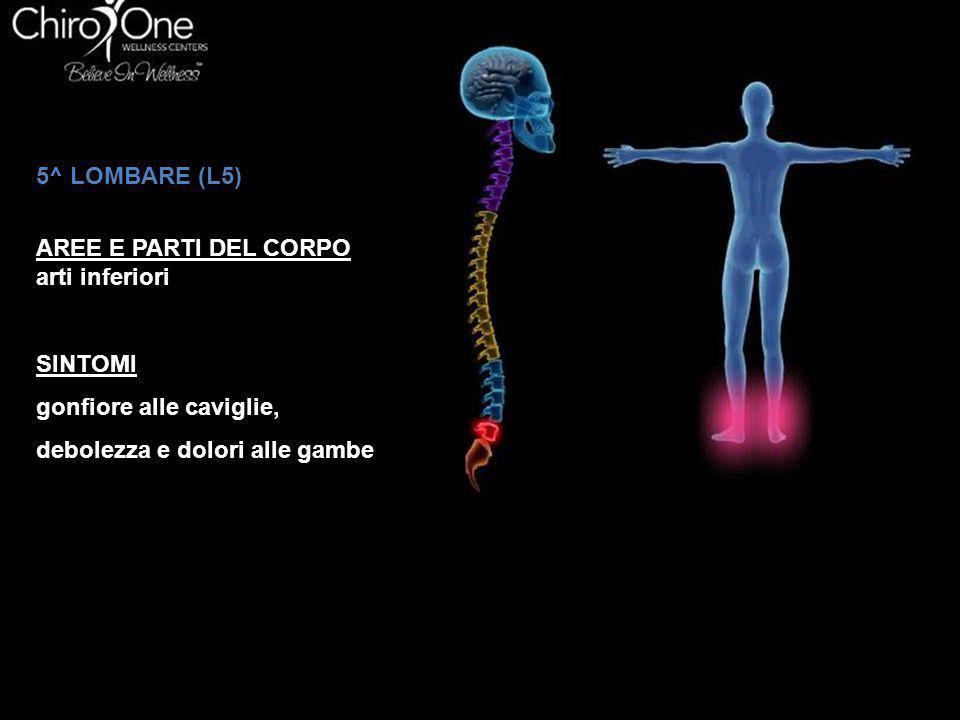 5^ LOMBARE (L5) AREE E PARTI DEL CORPO. arti inferiori.