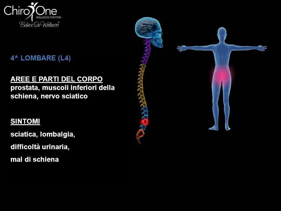 4^ LOMBARE (L4) AREE E PARTI DEL CORPO. prostata, muscoli inferiori della schiena, nervo sciatico.