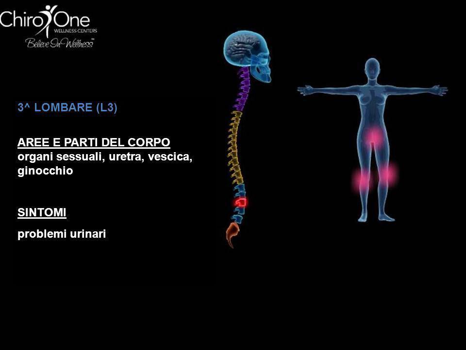 3^ LOMBARE (L3) AREE E PARTI DEL CORPO. organi sessuali, uretra, vescica, ginocchio.