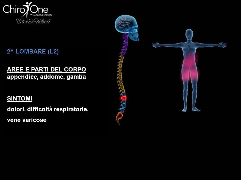 2^ LOMBARE (L2) AREE E PARTI DEL CORPO. appendice, addome, gamba. SINTOMI. dolori, difficoltà respiratorie,
