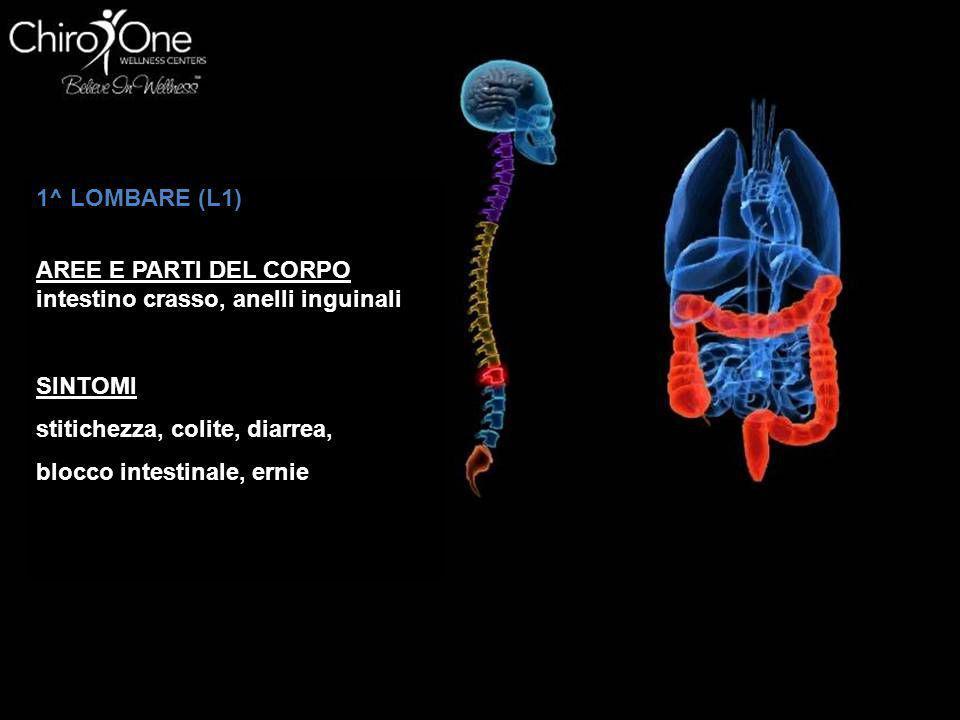1^ LOMBARE (L1) AREE E PARTI DEL CORPO. intestino crasso, anelli inguinali. SINTOMI. stitichezza, colite, diarrea,