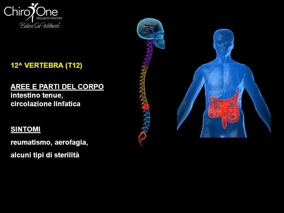 12^ VERTEBRA (T12) AREE E PARTI DEL CORPO. intestino tenue, circolazione linfatica. SINTOMI. reumatismo, aerofagia,