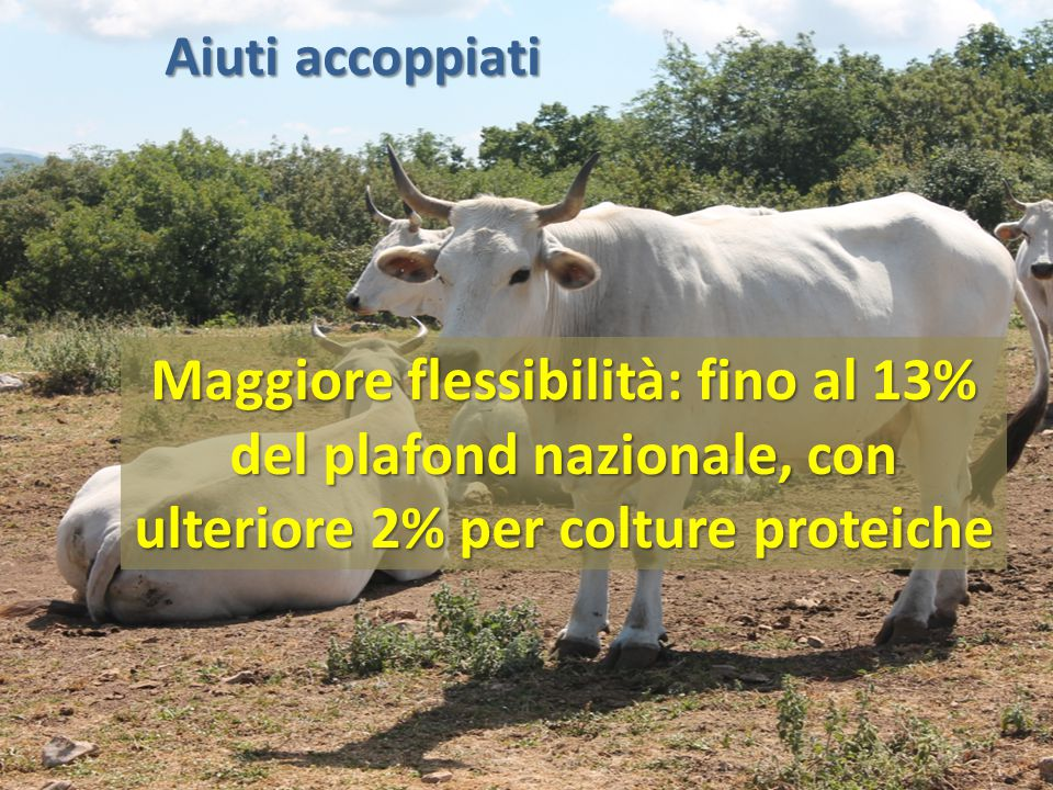 Aiuti accoppiati Maggiore flessibilità: fino al 13% del plafond nazionale, con ulteriore 2% per colture proteiche.