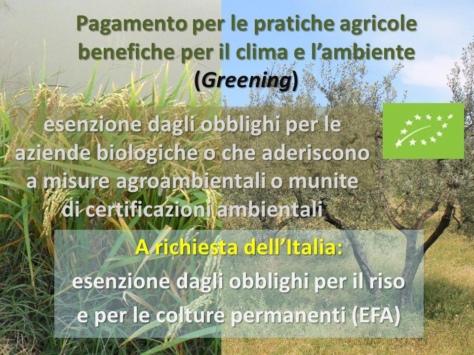 A richiesta dell'Italia: esenzione dagli obblighi per il riso
