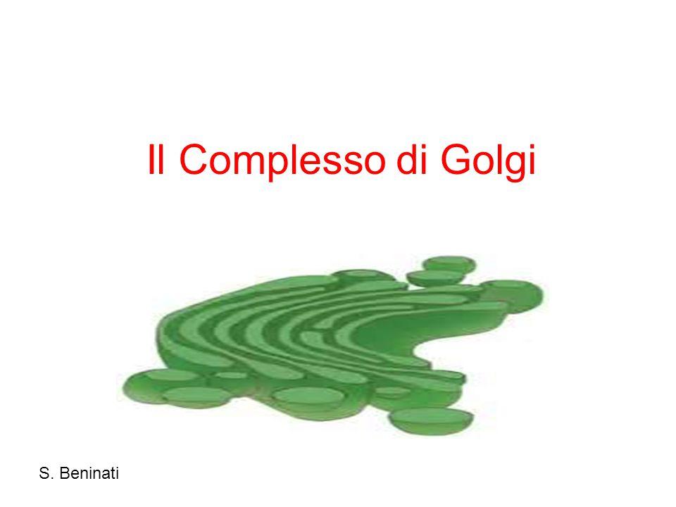 Il Complesso di Golgi S. Beninati