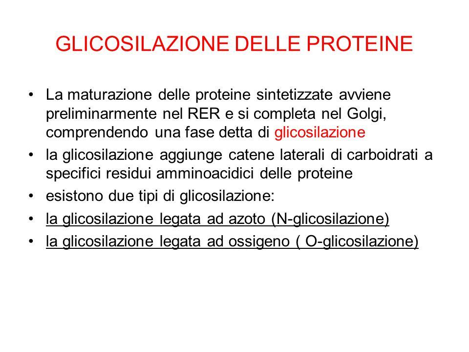GLICOSILAZIONE DELLE PROTEINE