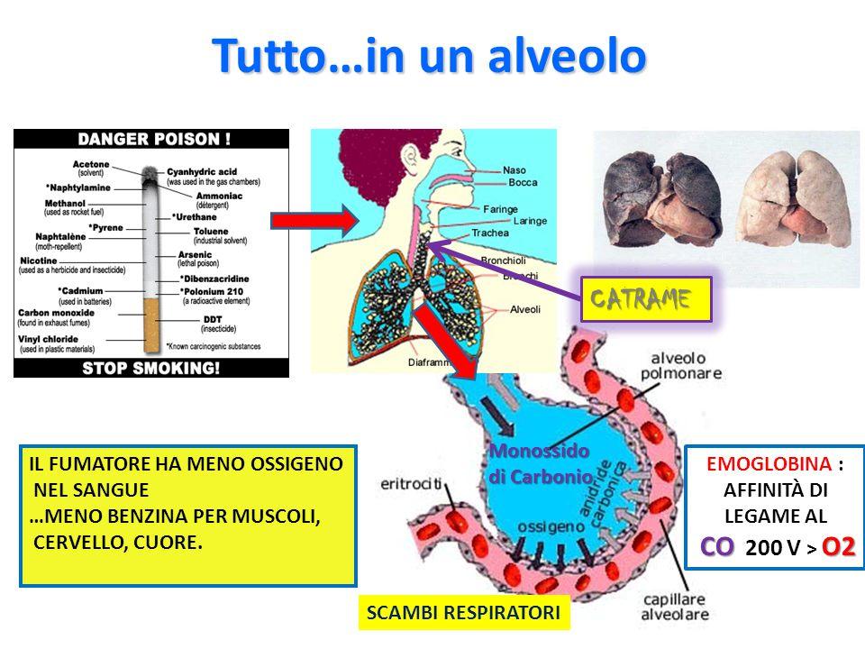 Tutto…in un alveolo CATRAME Monossido di Carbonio
