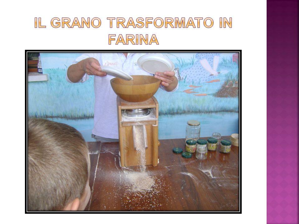 Il grano trasformato in farina