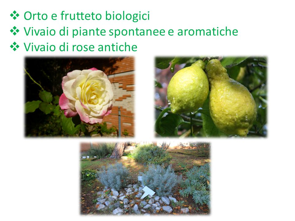 Orto e frutteto biologici