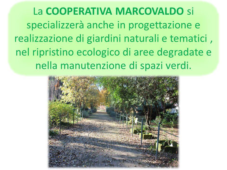 La COOPERATIVA MARCOVALDO si specializzerà anche in progettazione e realizzazione di giardini naturali e tematici , nel ripristino ecologico di aree degradate e nella manutenzione di spazi verdi.