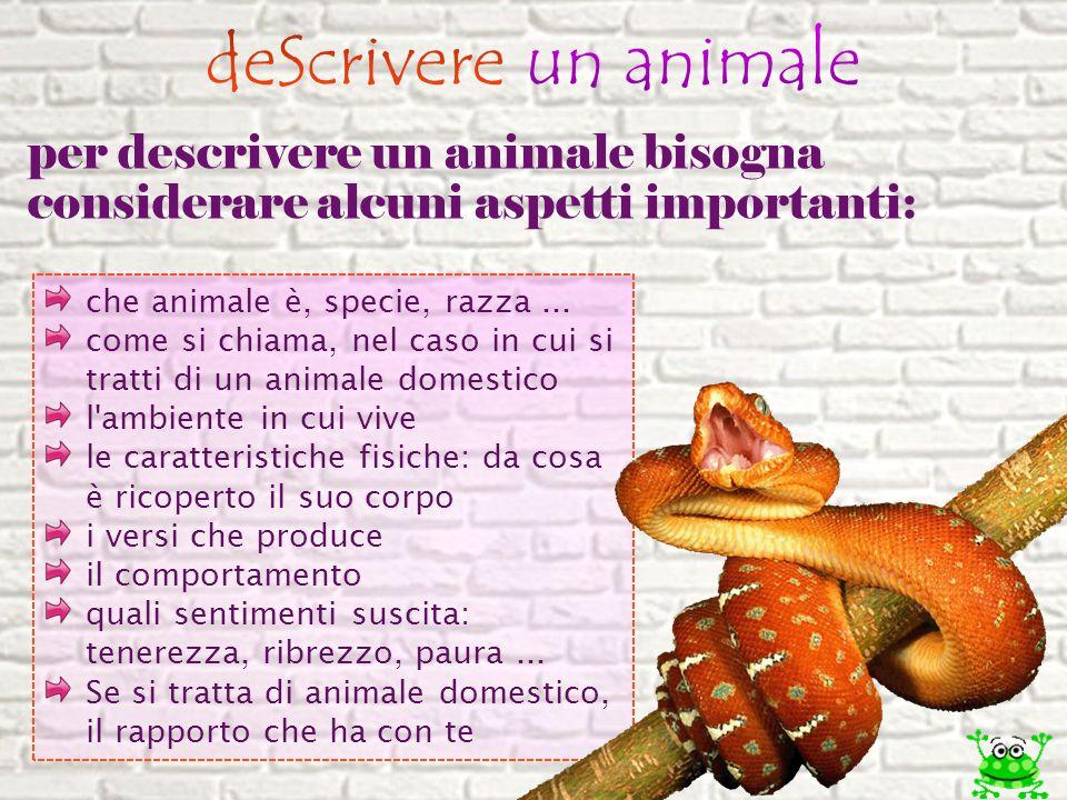 deScrivere un animale per descrivere un animale bisogna considerare alcuni aspetti importanti: che animale è, specie, razza ...