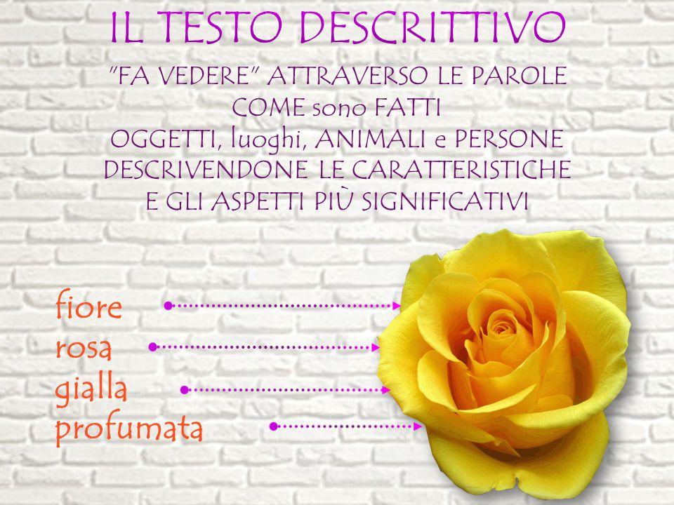 IL TESTO DESCRITTIVO fiore rosa gialla profumata
