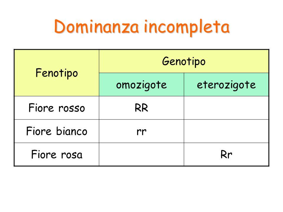 Dominanza incompleta Fenotipo Genotipo omozigote eterozigote