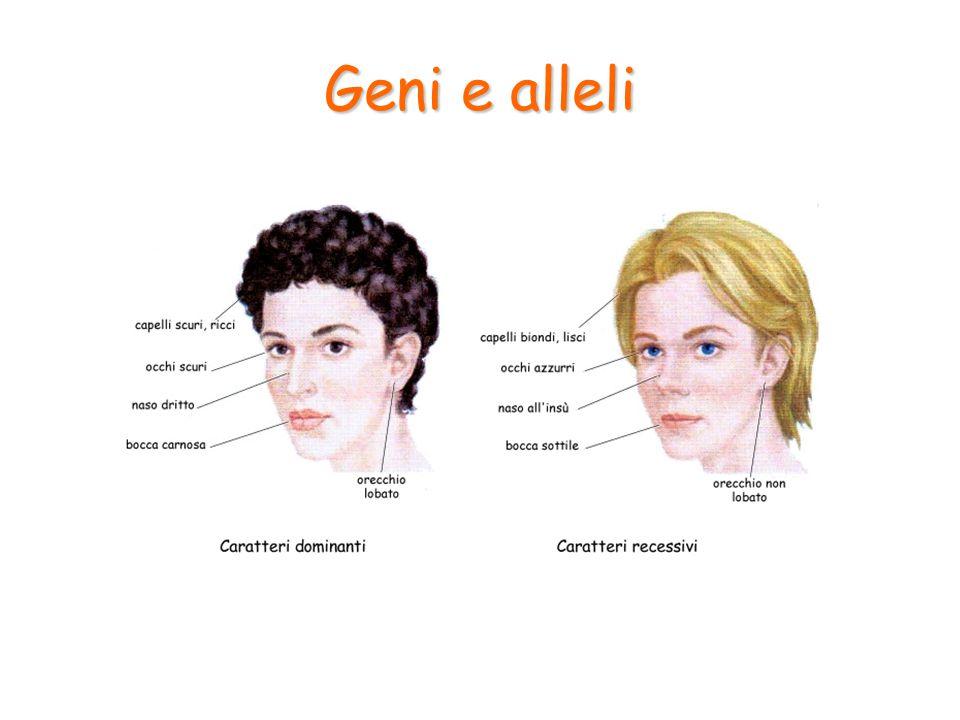 Geni e alleli