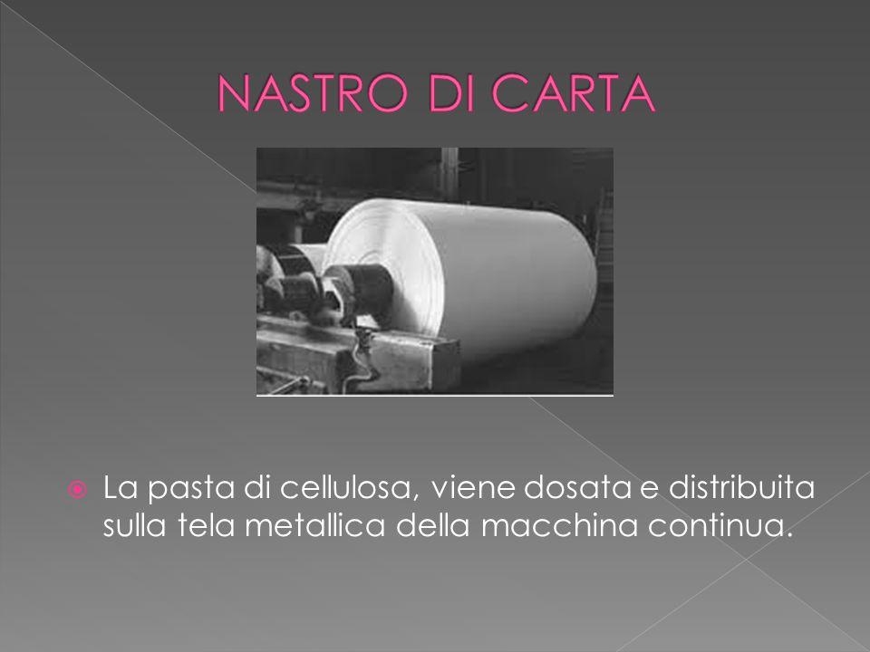 NASTRO DI CARTA La pasta di cellulosa, viene dosata e distribuita sulla tela metallica della macchina continua.