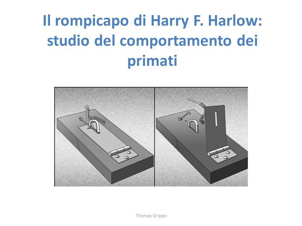 Il rompicapo di Harry F. Harlow: studio del comportamento dei primati