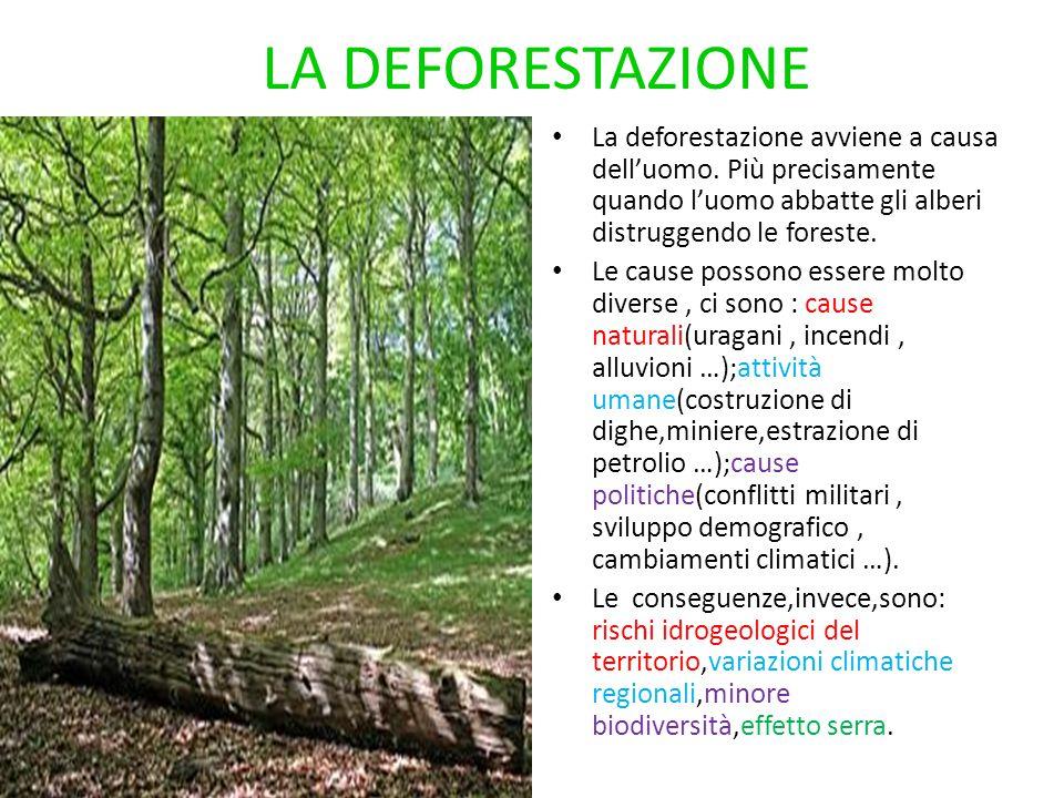 LA DEFORESTAZIONE La deforestazione avviene a causa dell'uomo. Più precisamente quando l'uomo abbatte gli alberi distruggendo le foreste.