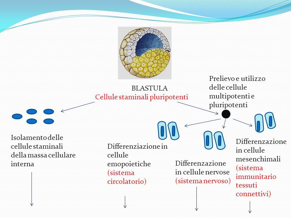 Prelievo e utilizzo delle cellule multipotenti e pluripotenti