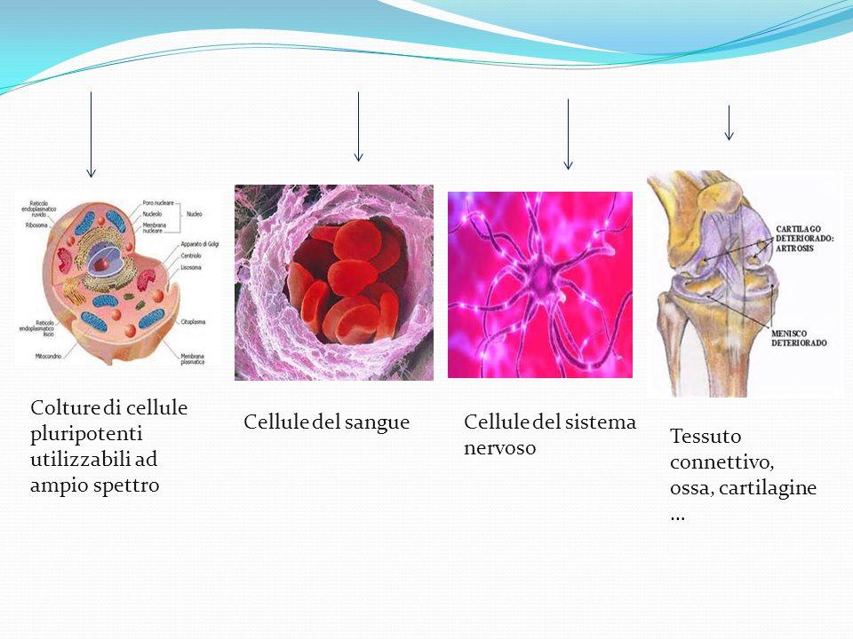 Colture di cellule pluripotenti utilizzabili ad ampio spettro
