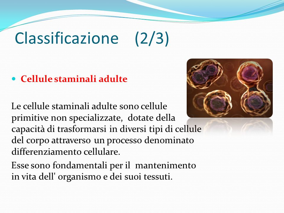 Classificazione (2/3) Cellule staminali adulte