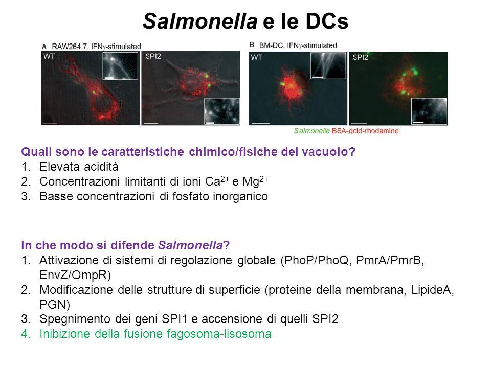 Salmonella e le DCs Quali sono le caratteristiche chimico/fisiche del vacuolo Elevata acidità. Concentrazioni limitanti di ioni Ca2+ e Mg2+