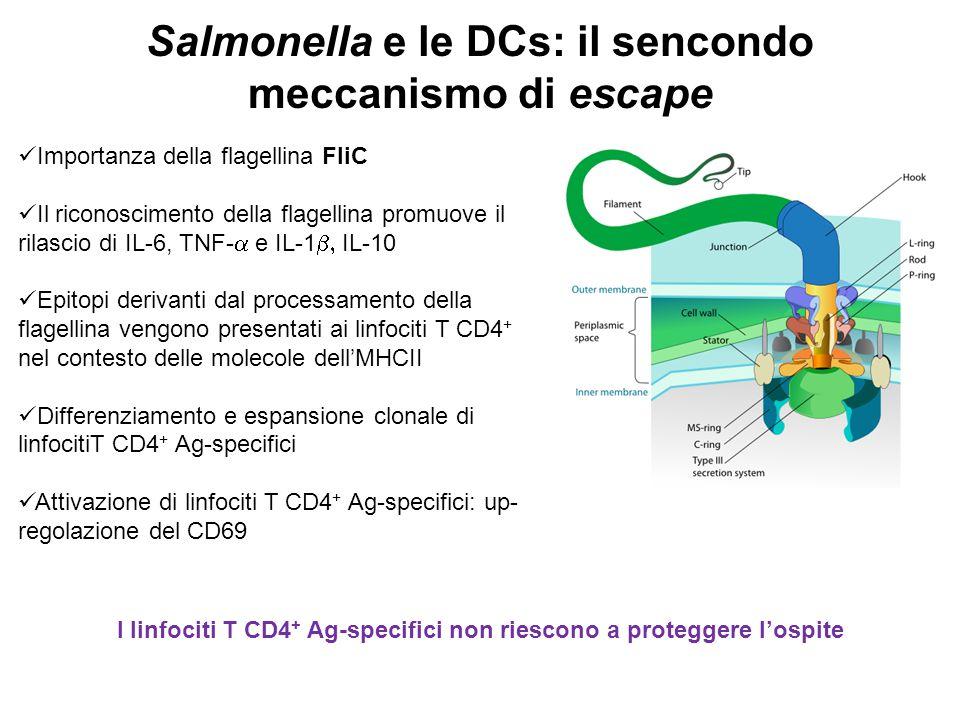 Salmonella e le DCs: il sencondo meccanismo di escape