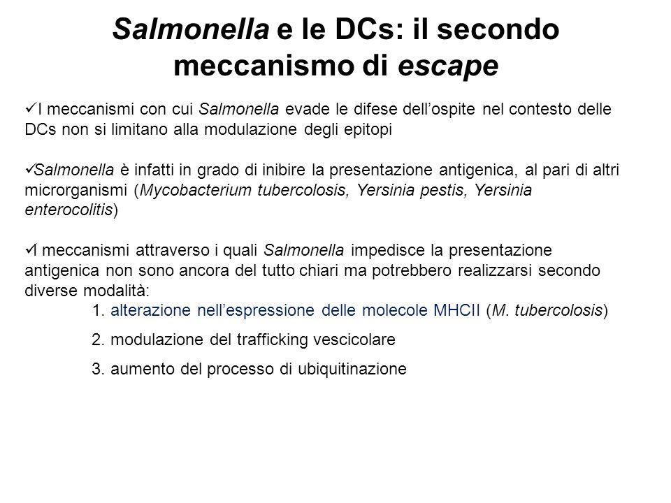 Salmonella e le DCs: il secondo meccanismo di escape