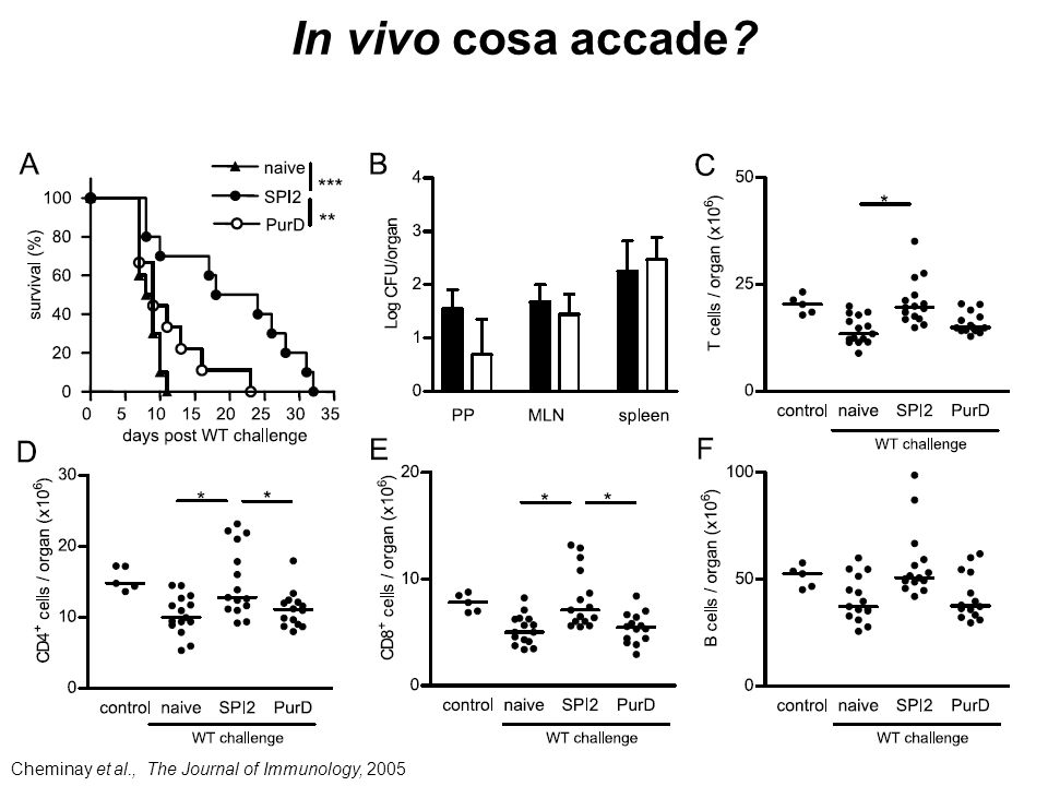 In vivo cosa accade Cheminay et al., The Journal of Immunology, 2005