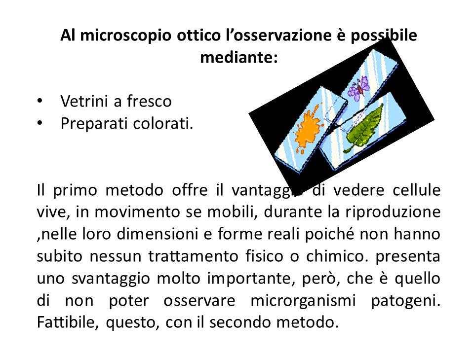 Al microscopio ottico l'osservazione è possibile mediante: