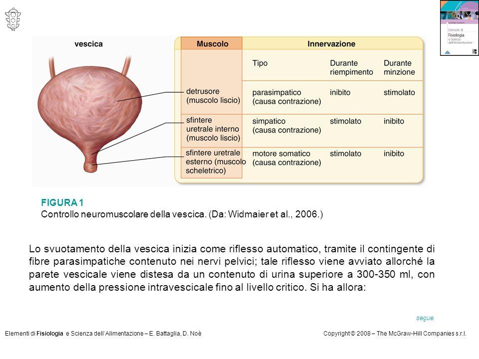 FIGURA 1 Controllo neuromuscolare della vescica. (Da: Widmaier et al., 2006.)