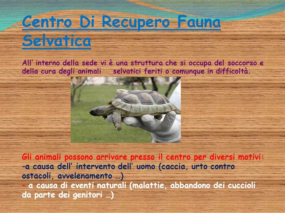 Centro Di Recupero Fauna Selvatica