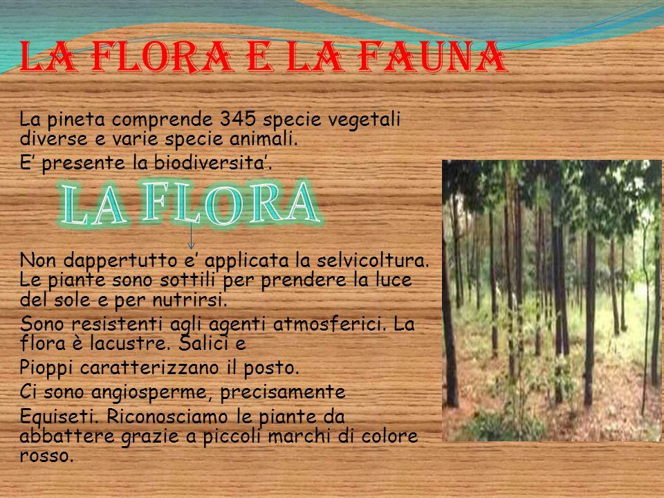 LA FLORA La flora e la fauna