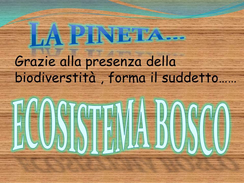 LA PINETA… ECOSISTEMA BOSCO